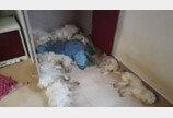 천안 원룸서 '굶어 죽은' 말티즈 11마리 사체 발견