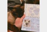 '나도 만들어주라옹'..올해 새로 나왔다는 고양이 여권