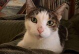 새 강아지 생기자 임신한 채로 쫓겨난 고양이, 이웃사촌에 도움을 청하다