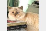별이 된 칼 라거펠트, 그의 고양이는 어떻게 될까