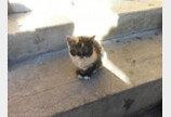 출장지에서 만난 새끼 길고양이