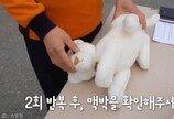 """""""30번 압박하고, 후~후~""""..강아지 고양이 심폐소생술 방법"""