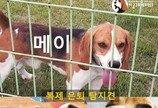 """""""서울대 수의대 실험실 퇴역 탐지견 구조해달라"""" 국민청원"""