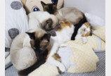 집사 뺨 때리는 고양이와 그걸 즐기는 집사