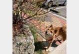 """반려견과 똑 닮은 빵 발견한 주인..""""진짜 내 강아지는 어디?"""""""