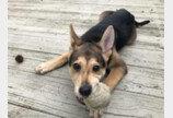 콘크리트 더미서 구조된 강아지, 입양까지 일사천리