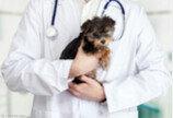 수의사가 올린 동물병원비 국민청원, 동의 1만명 넘어