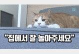 """전문가가 말하는 '고양이 산책'..""""왜 나가세요?"""""""
