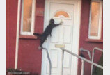 """사람처럼 노크하는 고양이 포착..""""집사야~ 문 열어라옹!"""""""