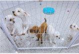 서울시, 보호소 강아지 고양이 입양하면 5만원 상당 축하선물