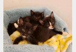 종이상자에 담겨 버려진 39마리의 새끼고양이