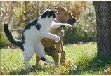고양이들은 왜 싸울까