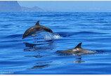 캐나다, 프리윌리법 하원 통과..`고래·돌고래에게 자유를`