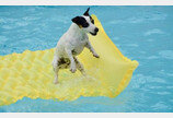 모든 강아지들이 수영을 잘하는건 절대 아니라고요