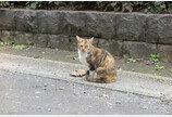 서울시, '재개발 지역 길고양이 보호조치' 시민 의견 수렴