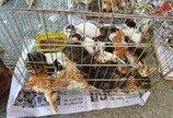"""""""정부는 불법 동물판매에 대한 입장 밝히고 대책 마련하라"""""""