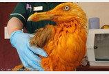 수의사도 모른 열대지방 새? 카레 뒤집어쓴 갈매기!
