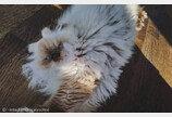 에어컨 고장나자 더위에 녹아버린 고양이