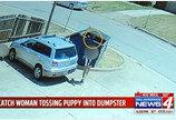 강아지를 쓰레기 버리듯 버린 인간쓰레기..`CCTV에 덜미`