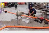 불 속에서 강아지 5형제 구한 중국 소방관들