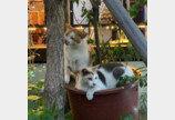 경의선 숲길 고양이 학대 처벌 청원, 청와대 답변요건 20만 넘겼다