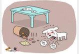 강아지도 식중독에 걸리나요?? 걸려요!
