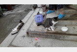 """""""할머니, 저만 따라오세요""""..할머니 산책시켜드리는 고양이"""