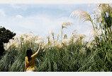 벌써 가을 느낌…청산수목원 팜파스 축제 11월 24일까지 진행