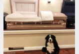 장례식장서 유족 위로하는 개..美 백만번째 `좋은 반려견 시민`