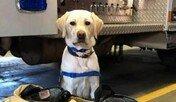 응급실에서 환자 치료하느라 지친 의사 곁 지키는 강아지