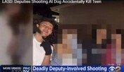 경찰이 개에 쏜 총알..바닥에 튕겨 10대 견주 사망