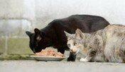 '관리소가 놓은 쥐약 때문에 고양이들 죽었다' 경찰고발