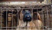 동물보호단체, '성남 모란시장 불법 개 판매 중단하라'