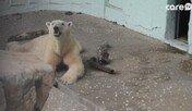 북극곰 '통키'의 고통과 절절한 외로움…이게 최선입니까?