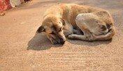 동물보호법 위반 경찰조사, 4년 만에 2배로
