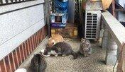 마당 점령한 고양이들…모두 합쳐 아홉이다옹~