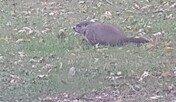 다람쥐와 비버, 근접 관찰은 위험한 행동