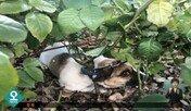 울산 왕복 10차선 도로 한가운데 유기된 강아지 구조