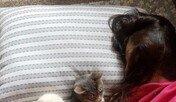 뻔뻔 혹은 당당…작지만 앙칼진 도둑 고양이