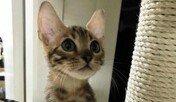 """""""이게 무슨 소리죠?"""" 간식 먹으면 '공룡 소리' 내는 고양이"""