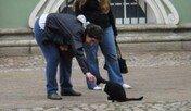 개와 고양이가 가진 충성심의 정체