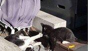 고양이가 주인 다리에 몸을 문지르는 이유