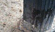 소변 냄새를 구분하는 고양이