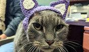 양쪽 귀 없는 고양이에게 찾아온 기적… 뜨개질 귀와 가족까지
