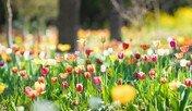 봄향기 너울대는 제주…3월 제주관광 10선