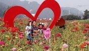 가을 정취 물씬…'평창 백일홍축제' 21일 개막