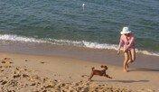 반려견과 해수욕하고 호캉스 즐긴다…펫 전용 패키지여행