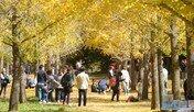 단풍이 물들고, 억새가 춤춘다…가을여행 어디로 갈까?