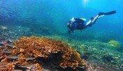 필리핀, 세계 최고 다이빙 여행지 선정