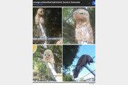 도심에 나타난 괴물 새, 정체는?
